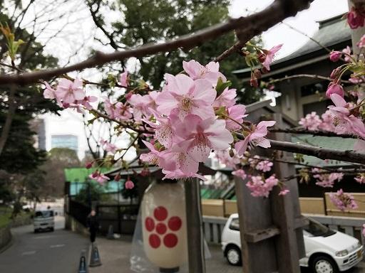 2020.02.15 上野のさくら咲く、レポート