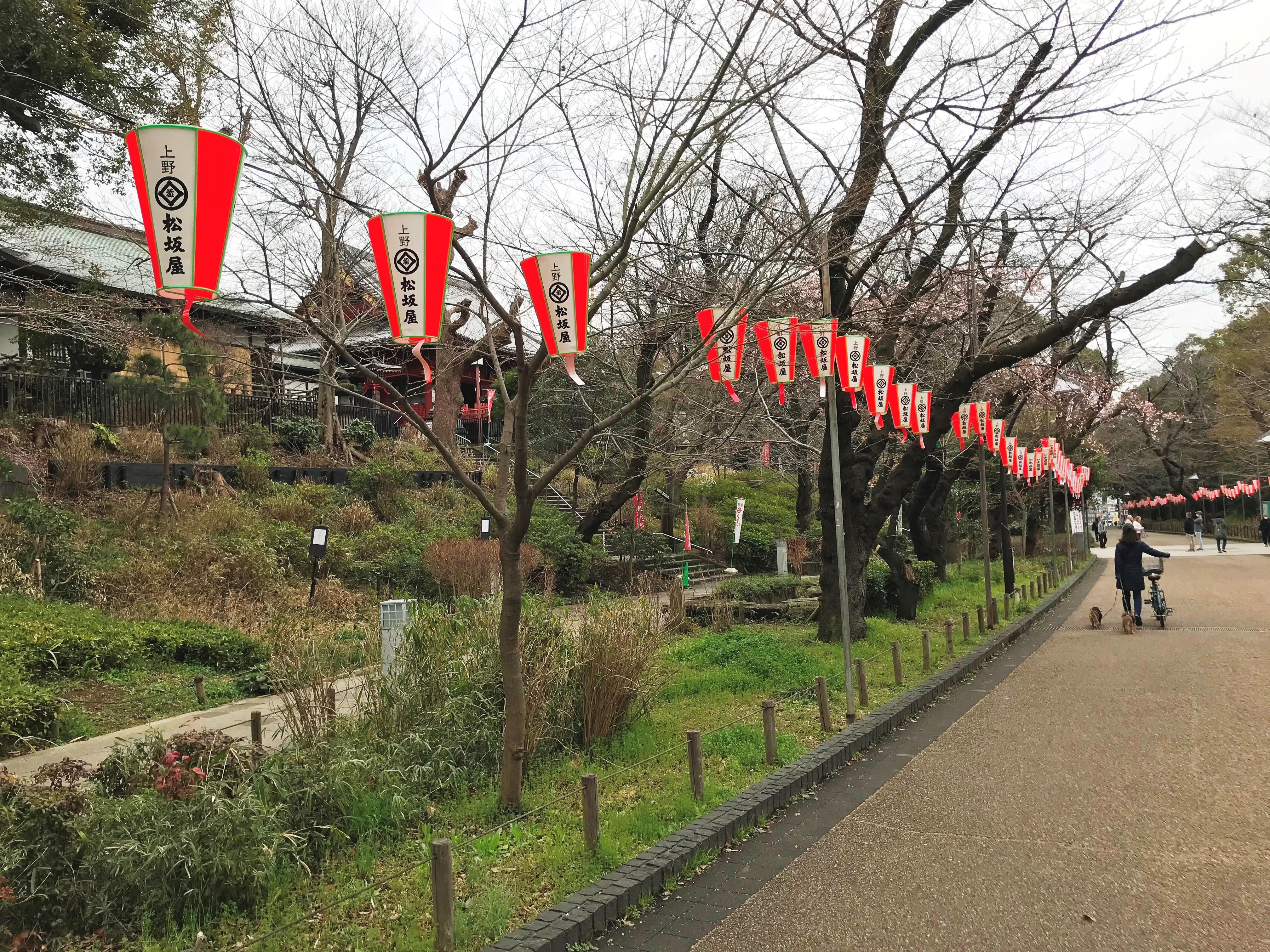 2020.03.09 上野のさくら咲く、レポート