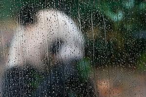 雨の日のシンシン