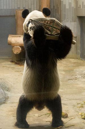 パンダにお年玉プレゼント