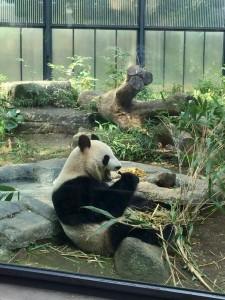 パンダ、ご飯、上野動物園