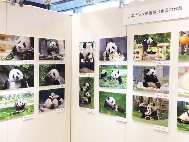 パンダ、日本パンダ保護協会