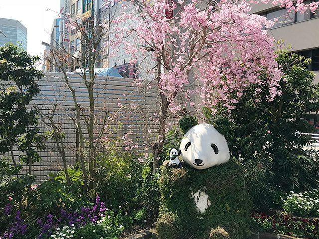 袴腰の緑パンダ