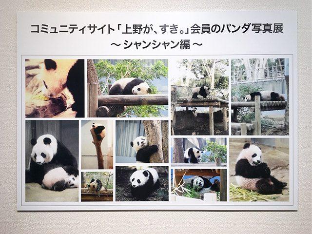 上野が、すき。パンダ写真展