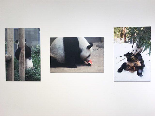 毎日パンダ写真展