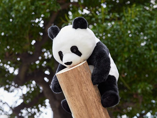 上野案内所オリジナル 『子パンダ シャンシャン(約80日齢)』 税込3,780円